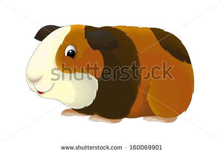 Guinea Pig Cartoon Stock Photos, Royalty.
