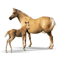 Baby Horse is Called as Foal Picture.