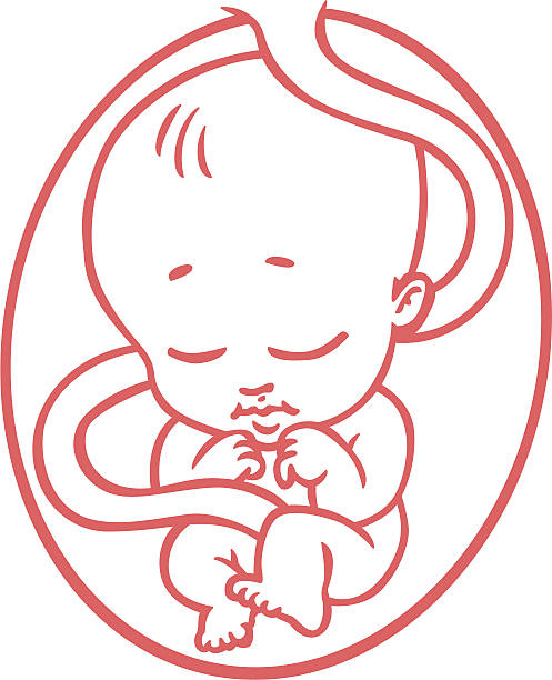 Baby In Womb Clipart.