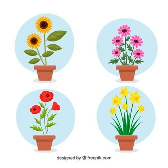 Flowerpot Vectors, Photos and PSD files.