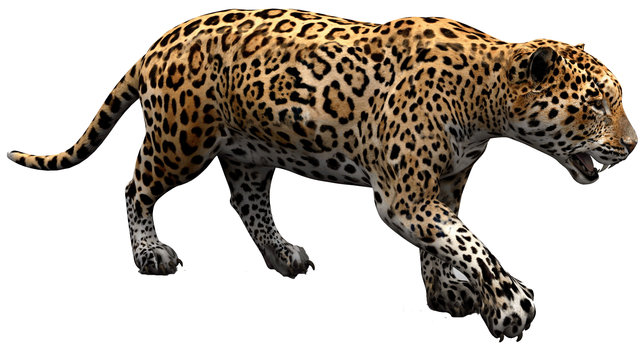 Jaguar clipart baby jaguar, Jaguar baby jaguar Transparent FREE for.