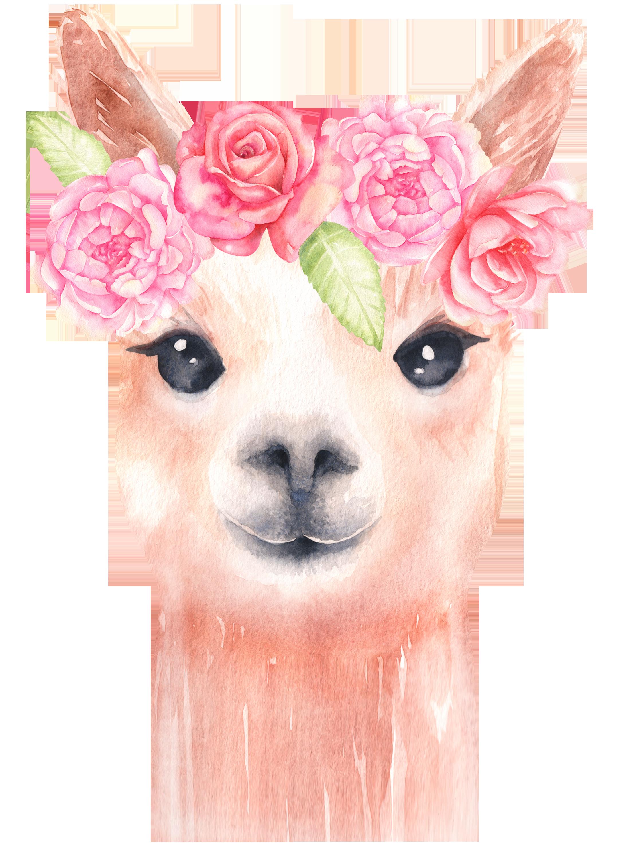 Llama watercolor clipart/ alpaca graphics/ watercolor clipart.