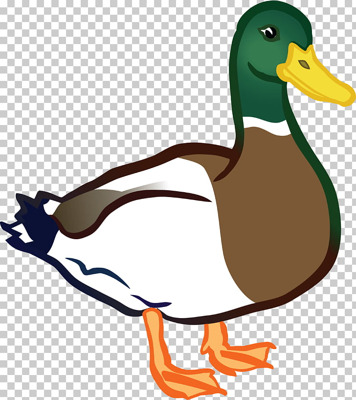 Mallard Baby Ducks American Pekin , duck PNG clipart.