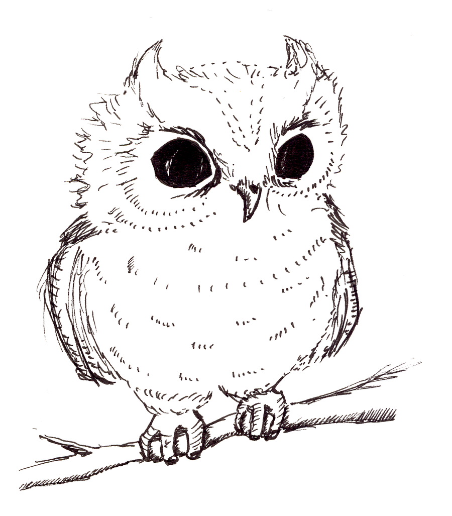 Baby Owl Clipart Black And White.