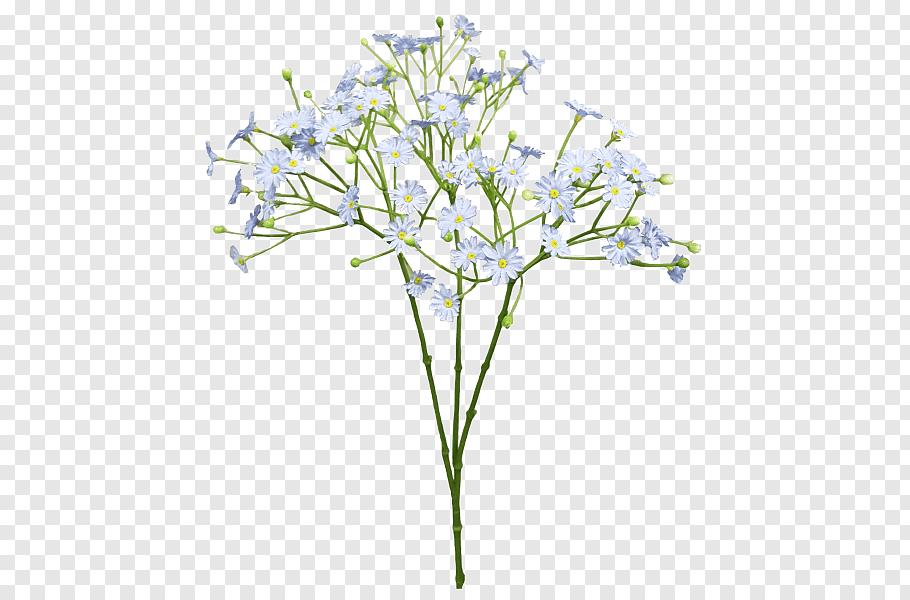 White petaled flowers illustration, Cut flowers Baby\'s.