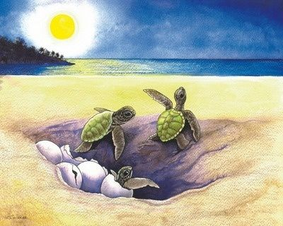 turtle drawings.