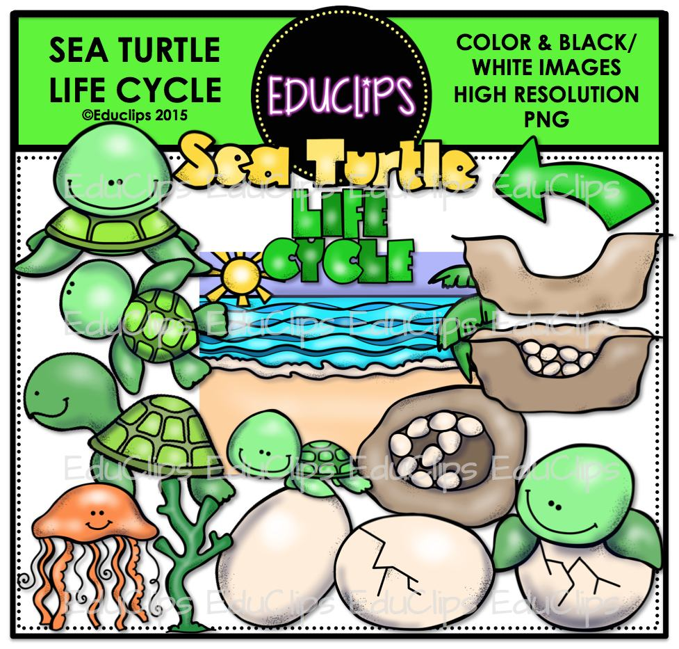 Sea Turtle Life Cycle Clip Art Bundle (Color and B&W).