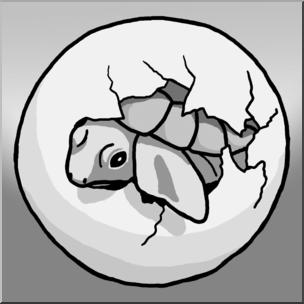 Clip Art: Sea Turtle Hatchling Grayscale I abcteach.com.