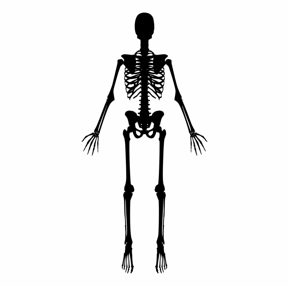 Skeleton Png, Download Png Image With Transparent Background.