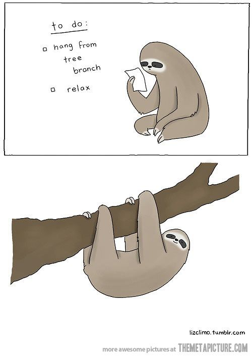 17 Best images about Sloths on Pinterest.