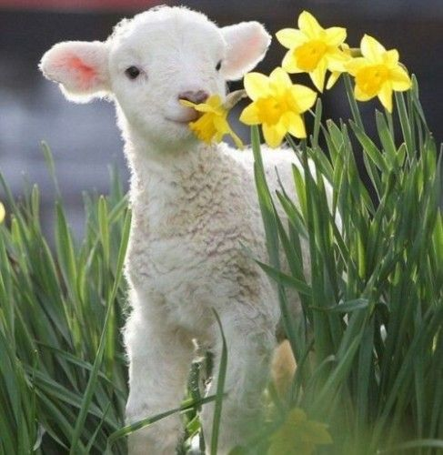 Spring Baby Animals Free Pictures Images Photos Wallpaper.