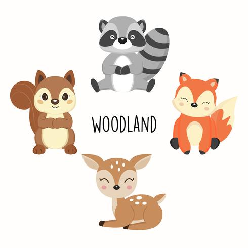 Cute woodland animals. Foxes,Raccoons,Squirrels cartoon.