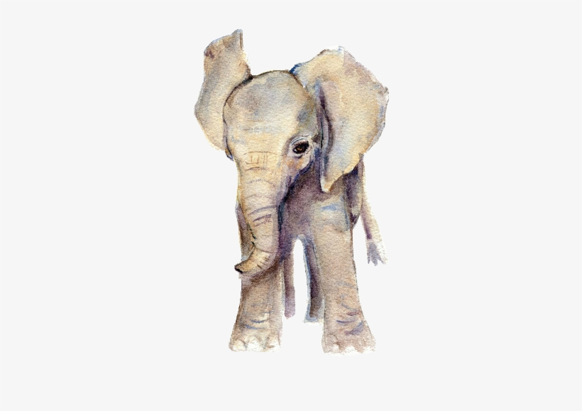 Elephant Watercolor, Baby Elephant Drawing, Elephant.