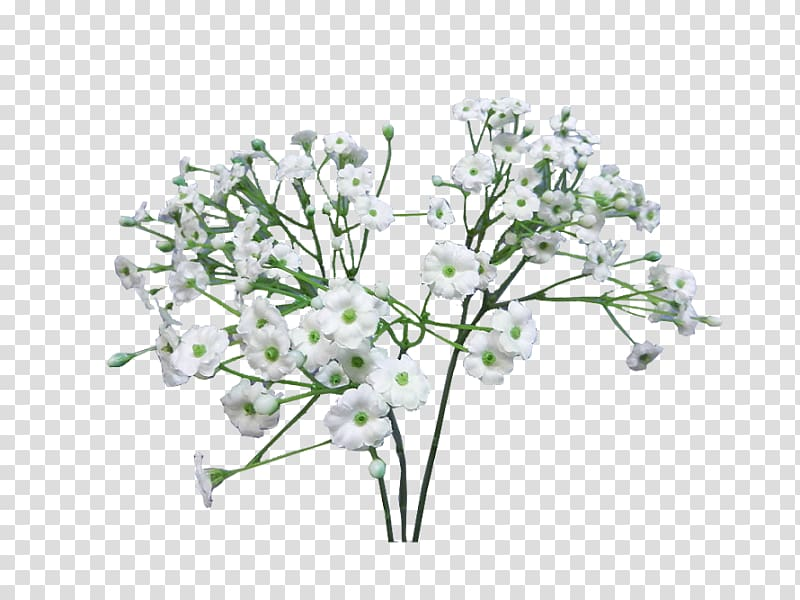 White flowers, Flower bouquet Baby\\\'s.