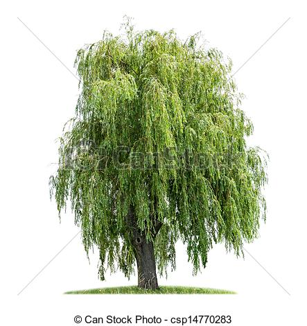 Weeping willow Stock Photos and Images. 1,088 Weeping willow.