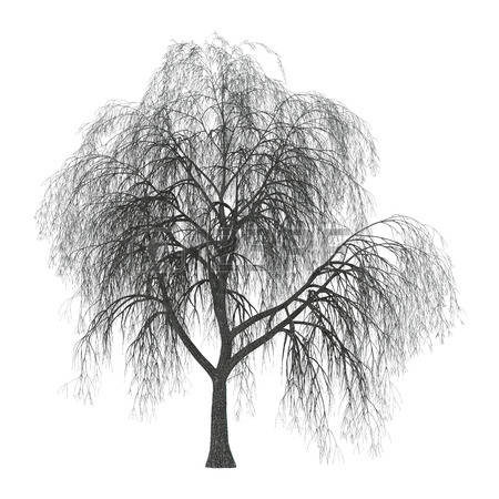 90 Weeping Willow Tree Stock Vector Illustration And Royalty Free.