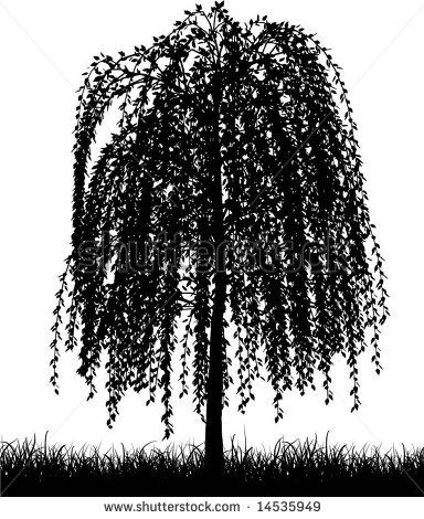 Weeping Willow Tree Stock Vectors, Images & Vector Art.