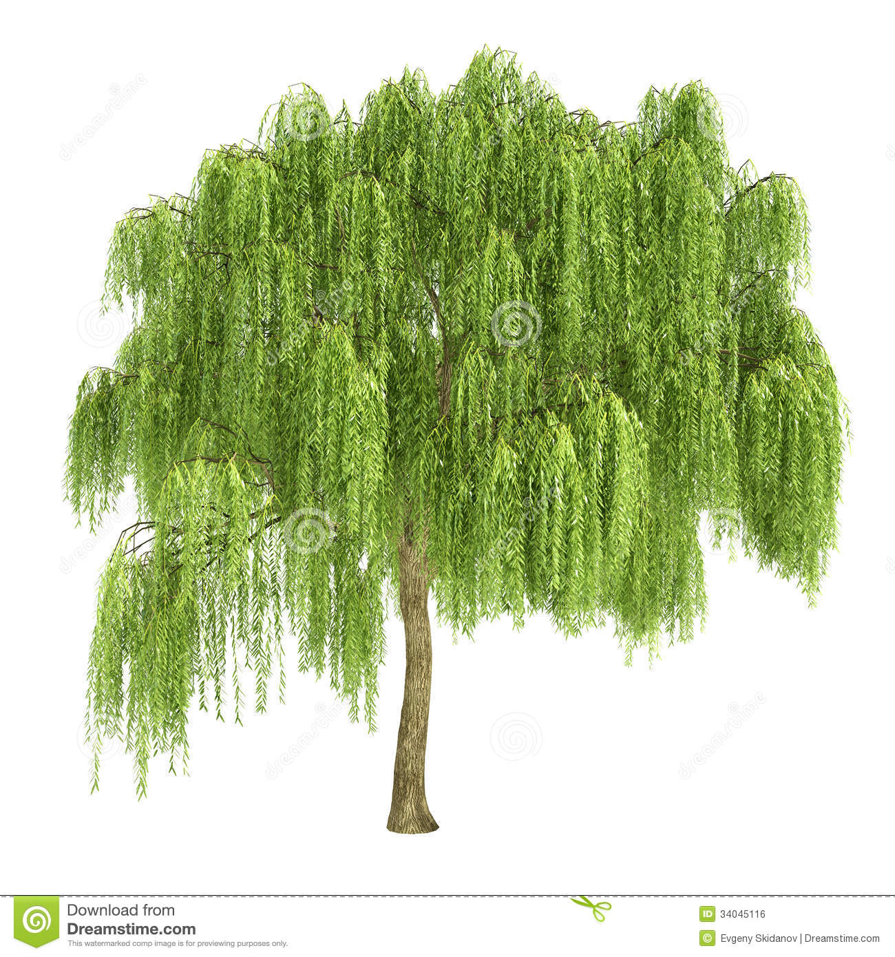 Free willow tree clipart.