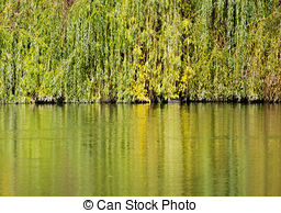 Stock Image of Autumn fall park. Lake and weeping willow tree.