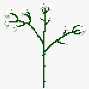 Baby's Breath Png.