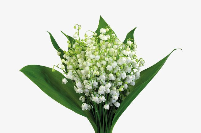 Bouquet Of Baby's Breath PNG, Clipart, Babys Clipart, Backgrounds.
