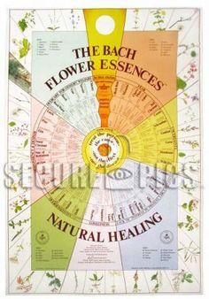 Vibrational medicine + homeopathy: Bach Flower Remedies.