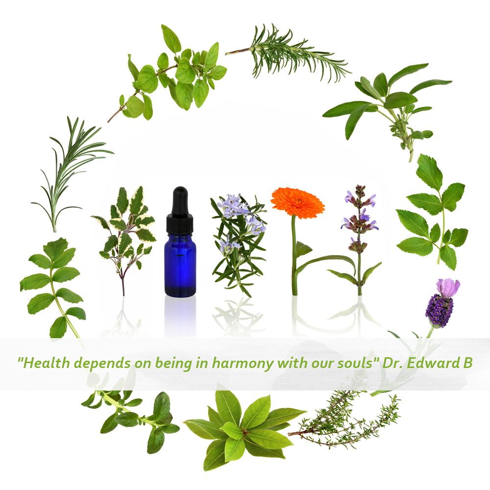 BACH FLOWER REMEDIES & YOUR EMOTIONS.