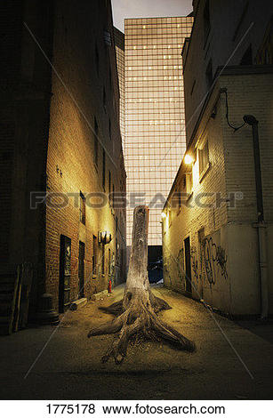 Pictures of Back alley 1775178.