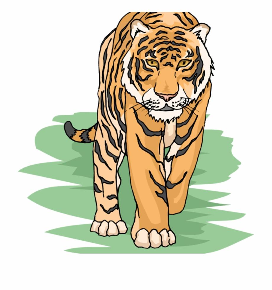 Free Transparent Tiger, Download Free Clip Art, Free Clip.