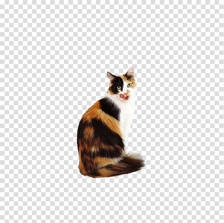 Calico cat Kitten Dog Popular cat names, Cat looking back.