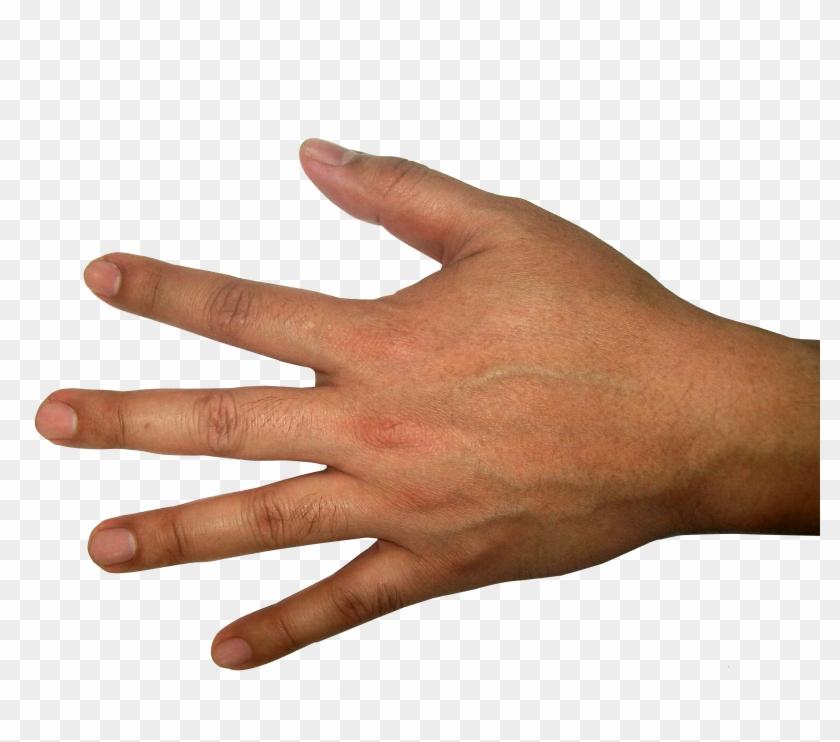 Vector Transparent Download Five Hand Png Image Purepng.