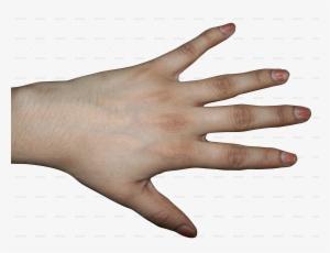Back Of Hand PNG & Download Transparent Back Of Hand PNG Images for.