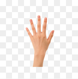 Back Of Hand Png (104+ images in Collection) Page 3.