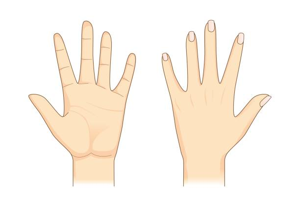 Back of hand clipart 3 » Clipart Station.