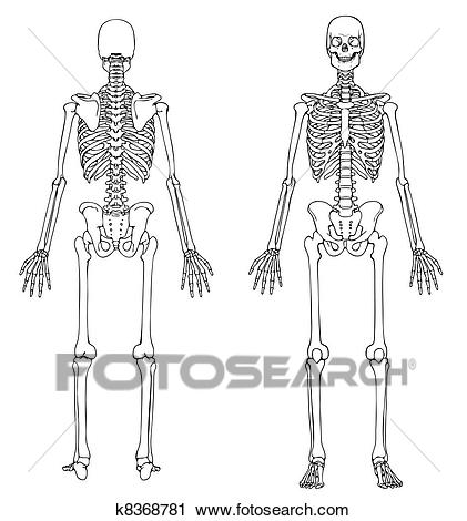 Skeleton Front and Back Clipart.