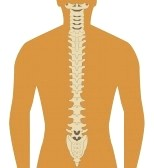 Backbone clipart - Clipground