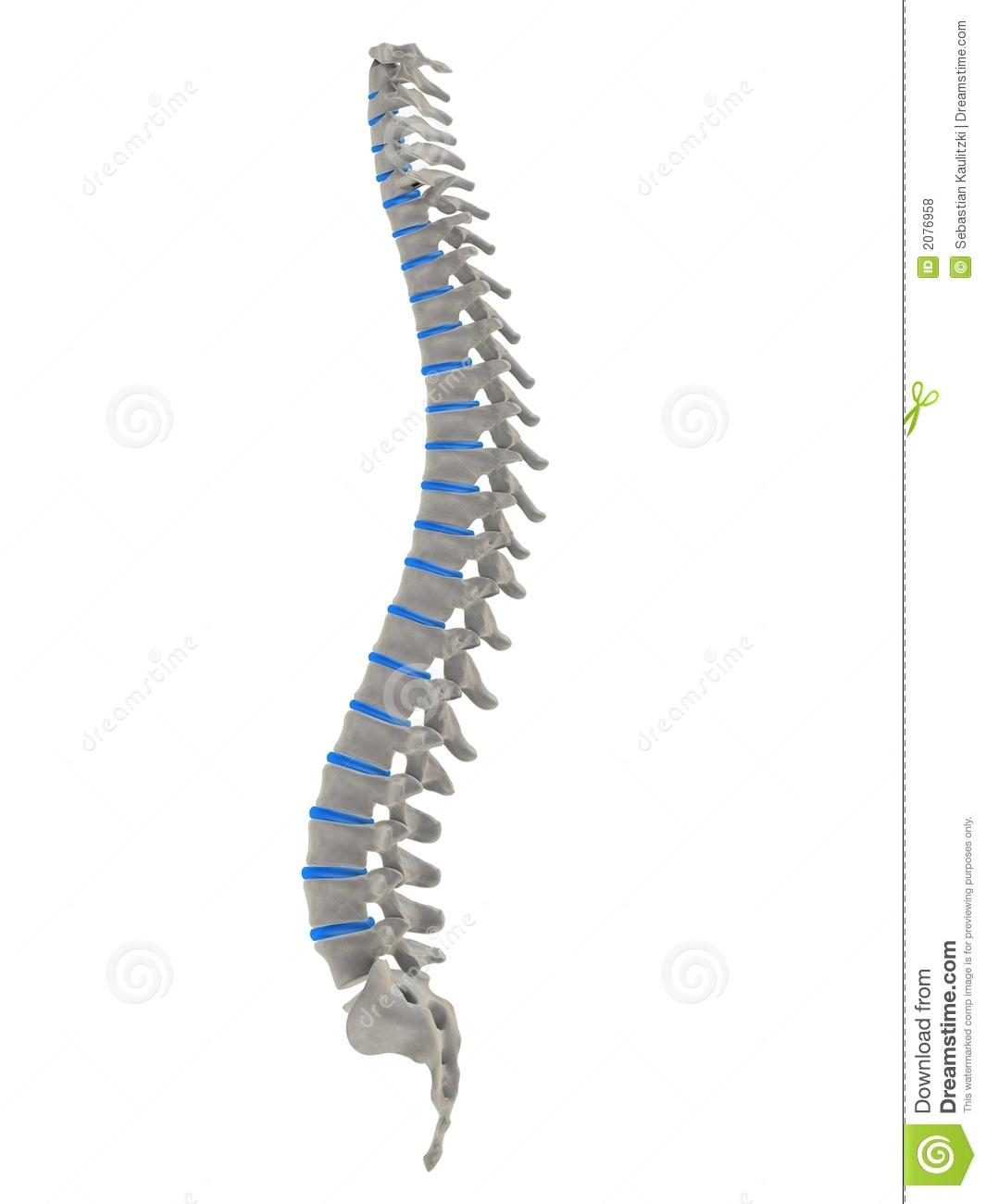 Back Spine Clipart.