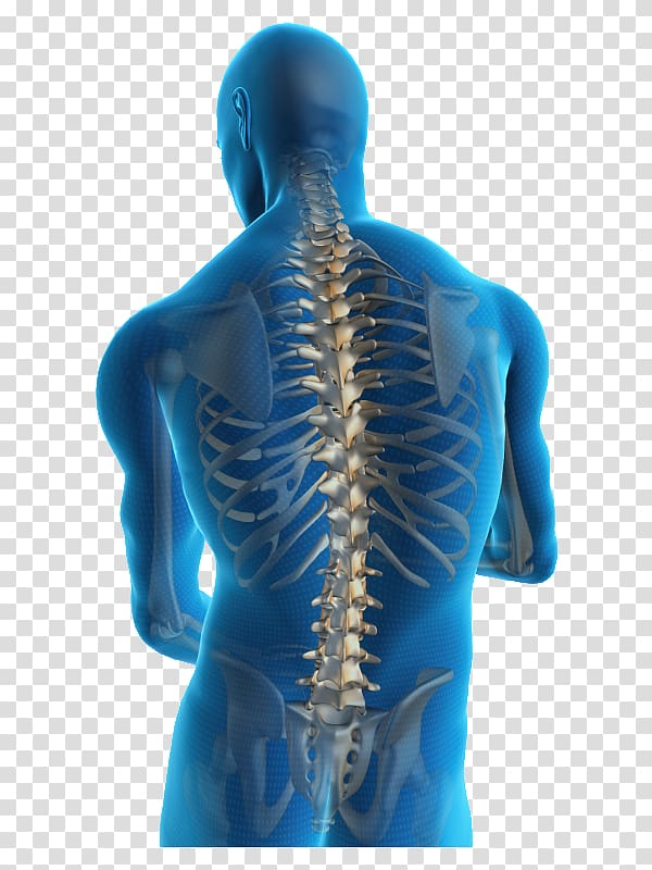 Low back pain Neck pain Back injury Human back, backbone.