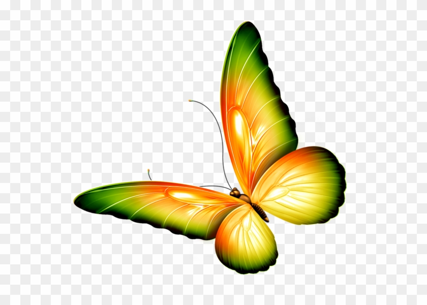 Butterfly Clipart With Transparent Background, HD Png.