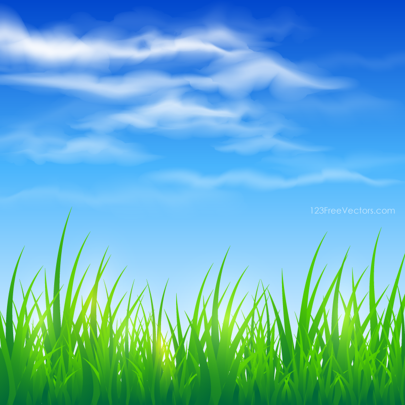 Blue Sky and Green Grass Background in 2019.