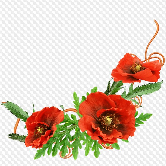 Set of floral corners for Photoshop in png format on a transparent.