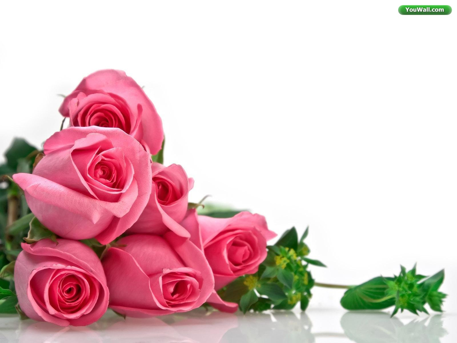 Roses Background Wallpaper.