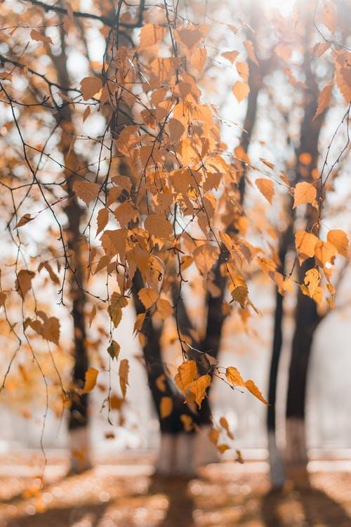 1000+ Amazing Blurred Background Photos · Pexels · Free Stock Photos.