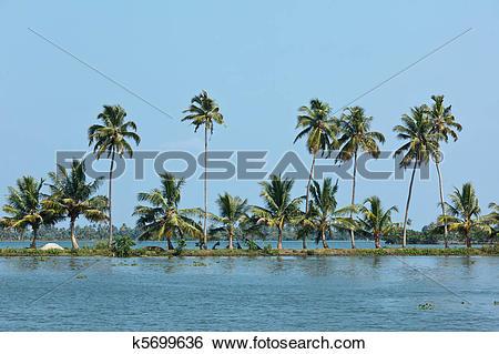 Stock Images of Palms at Kerala backwaters. Kerala, k5699636.