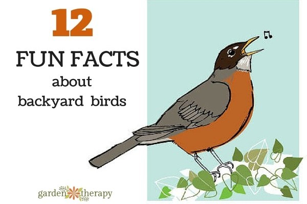 Get to Know Your Backyard Birds with These Fun Facts.