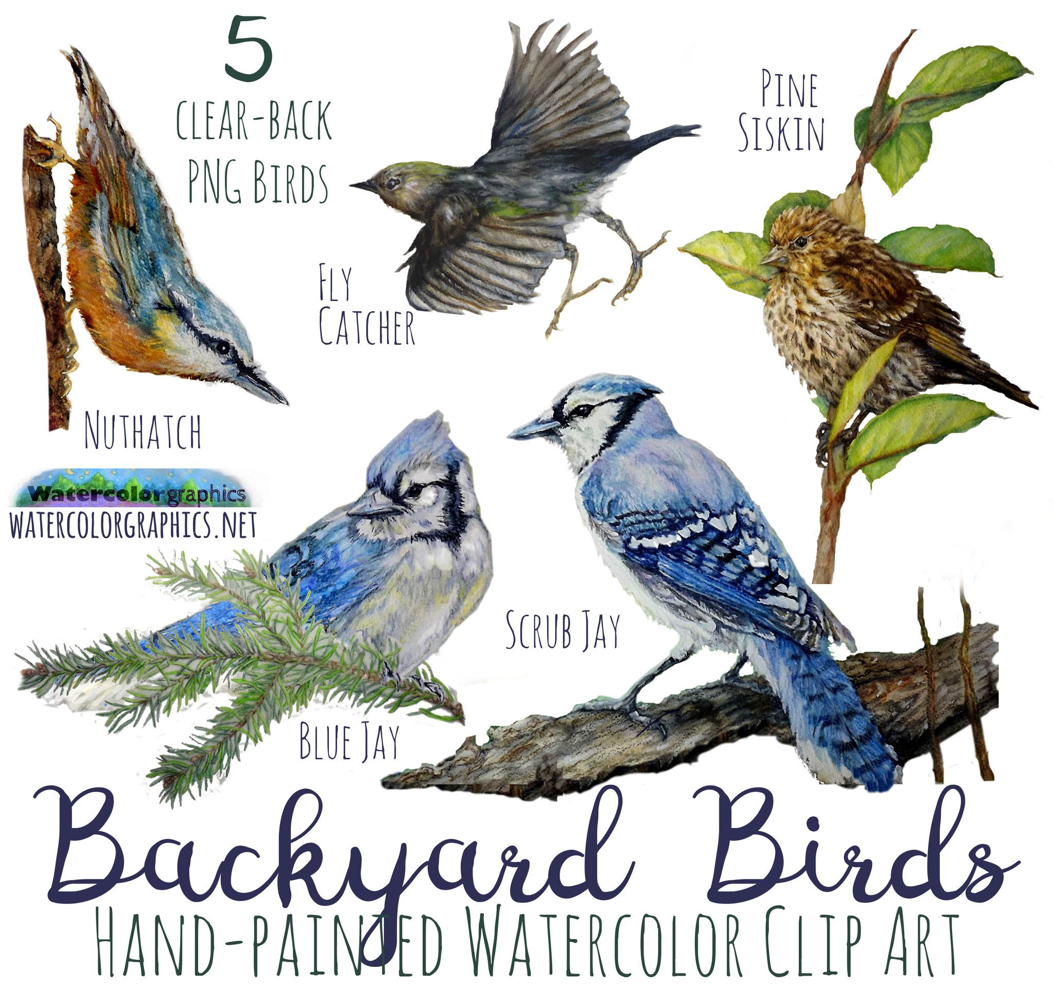 Backyard Birds Graphics Pack.