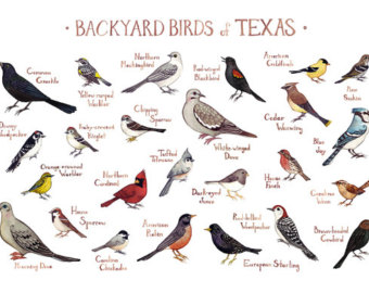 View Birds of the US Prints by KateDolamore on Etsy.