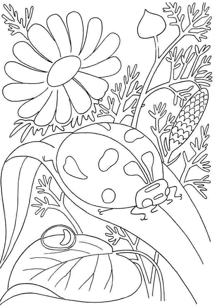 spring insects coloring pages spring flower coloring page.