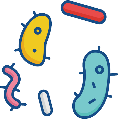 Bacteria PNG images free download.