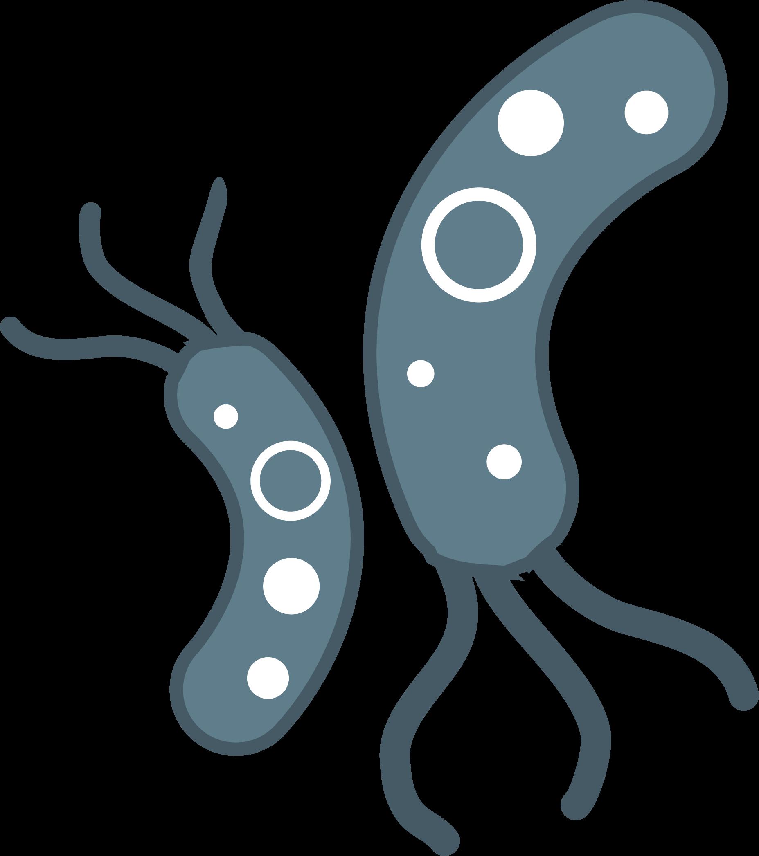 Bacteria PNG Transparent Images.
